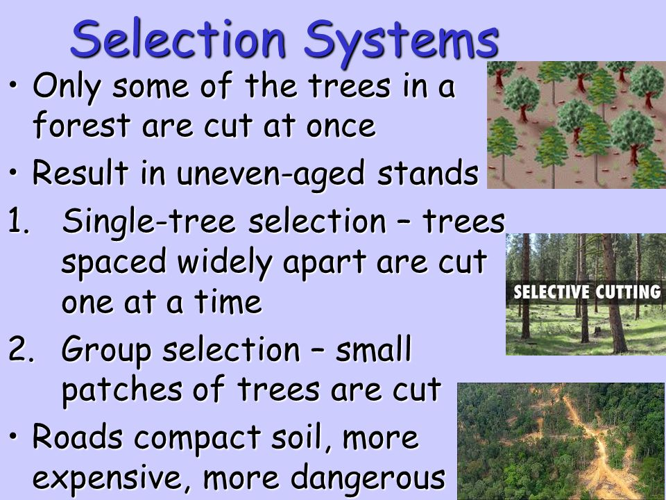 Selection Systems Only some of the trees in a forest are cut at once