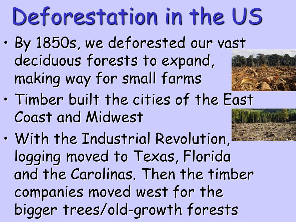 Deforestation in the US