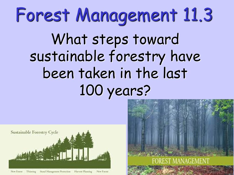 Forest Management 11.3 What steps toward sustainable forestry have been taken in the last 100 years