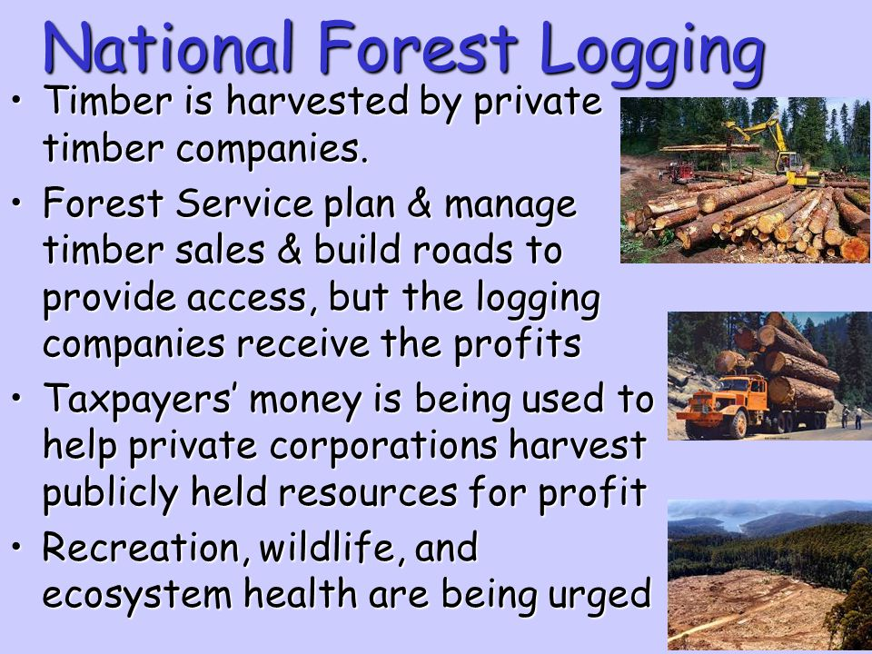 National Forest Logging