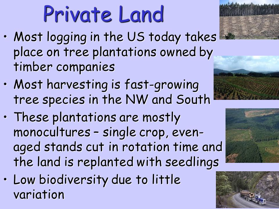 Private Land Most logging in the US today takes place on tree plantations owned by timber companies.