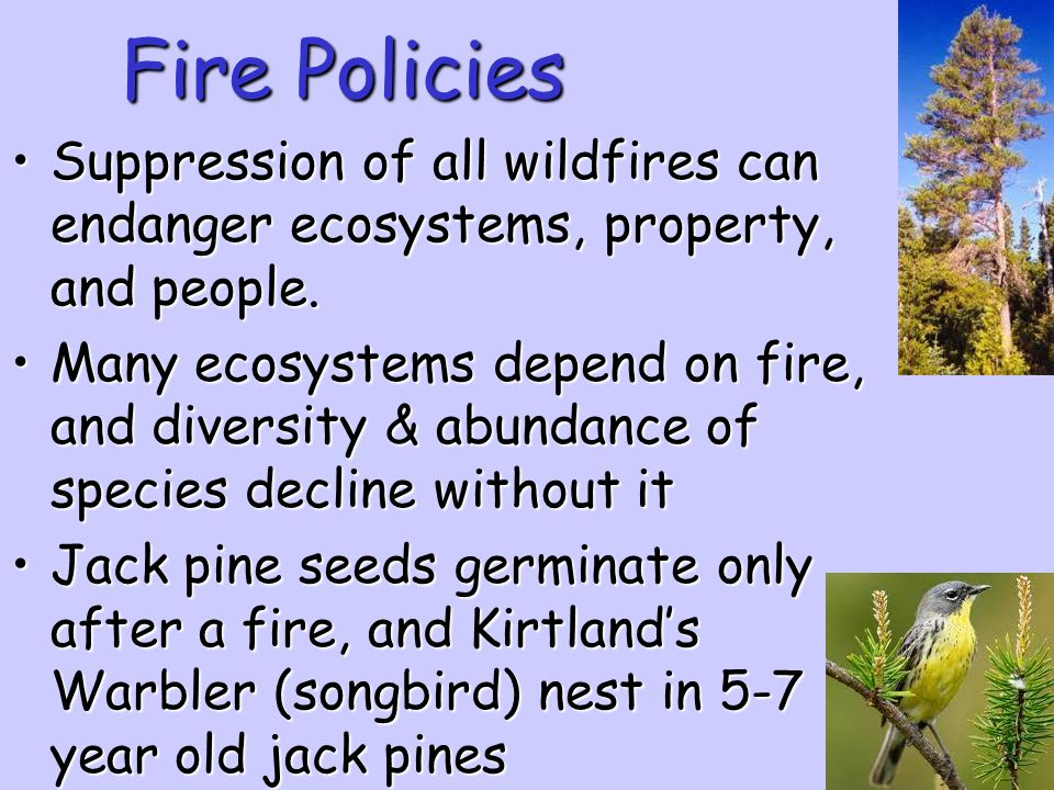 Fire Policies Suppression of all wildfires can endanger ecosystems, property, and people.