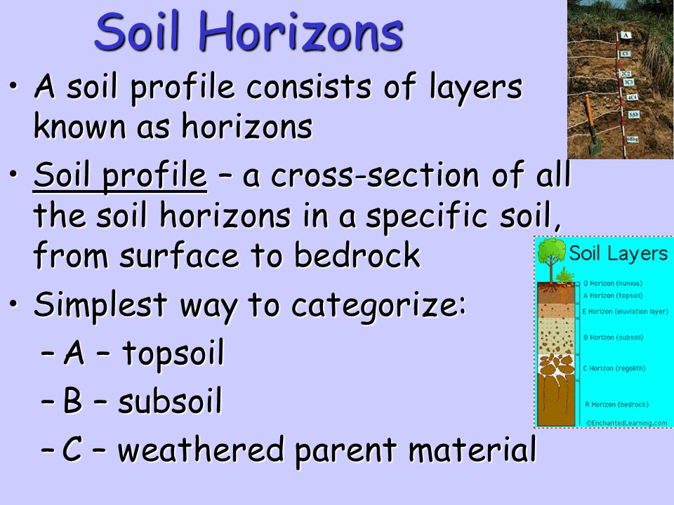 Soil Horizons A soil profile consists of layers known as horizons