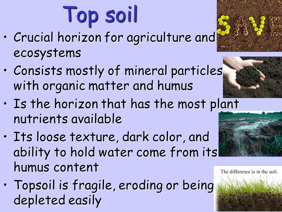 Top soil Crucial horizon for agriculture and ecosystems