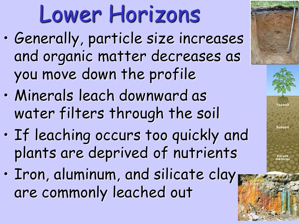 Lower Horizons Generally, particle size increases and organic matter decreases as you move down the profile.