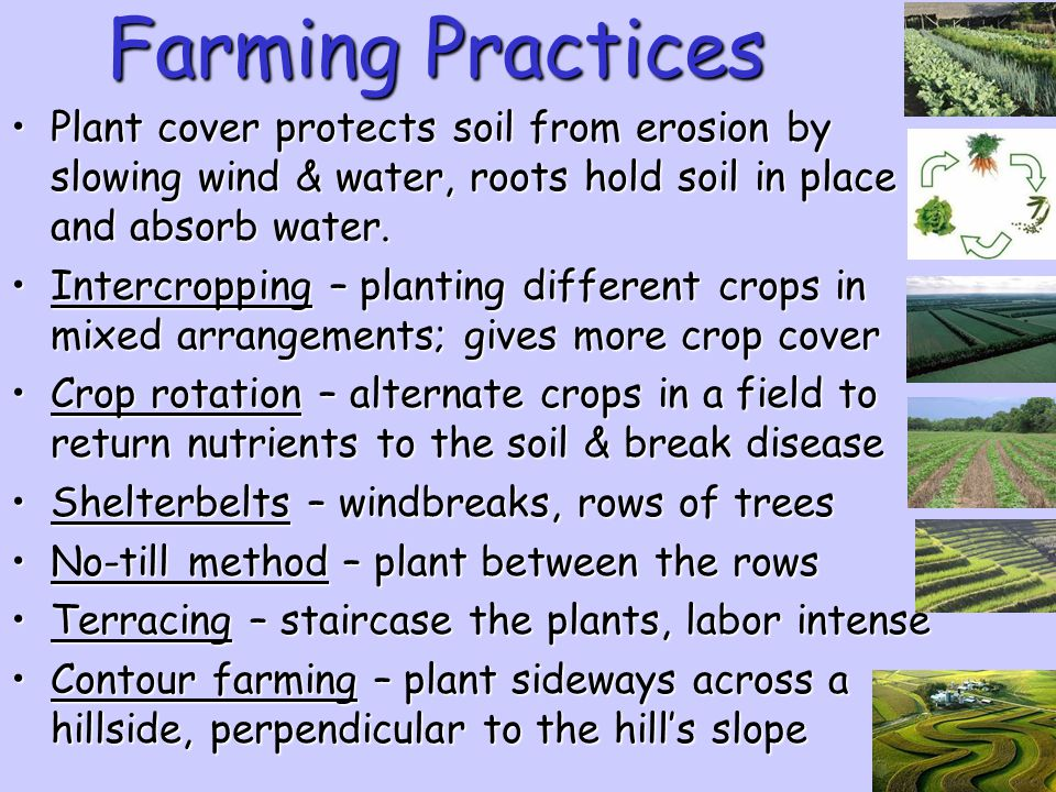 Farming Practices Plant cover protects soil from erosion by slowing wind & water, roots hold soil in place and absorb water.