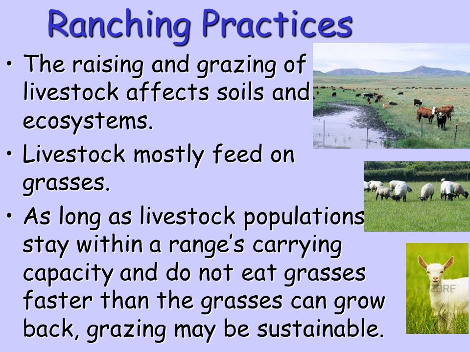 Ranching Practices The raising and grazing of livestock affects soils and ecosystems. Livestock mostly feed on grasses.