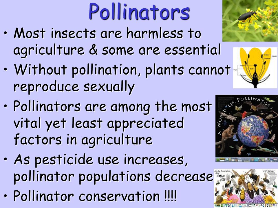 Pollinators Most insects are harmless to agriculture & some are essential. Without pollination, plants cannot reproduce sexually.