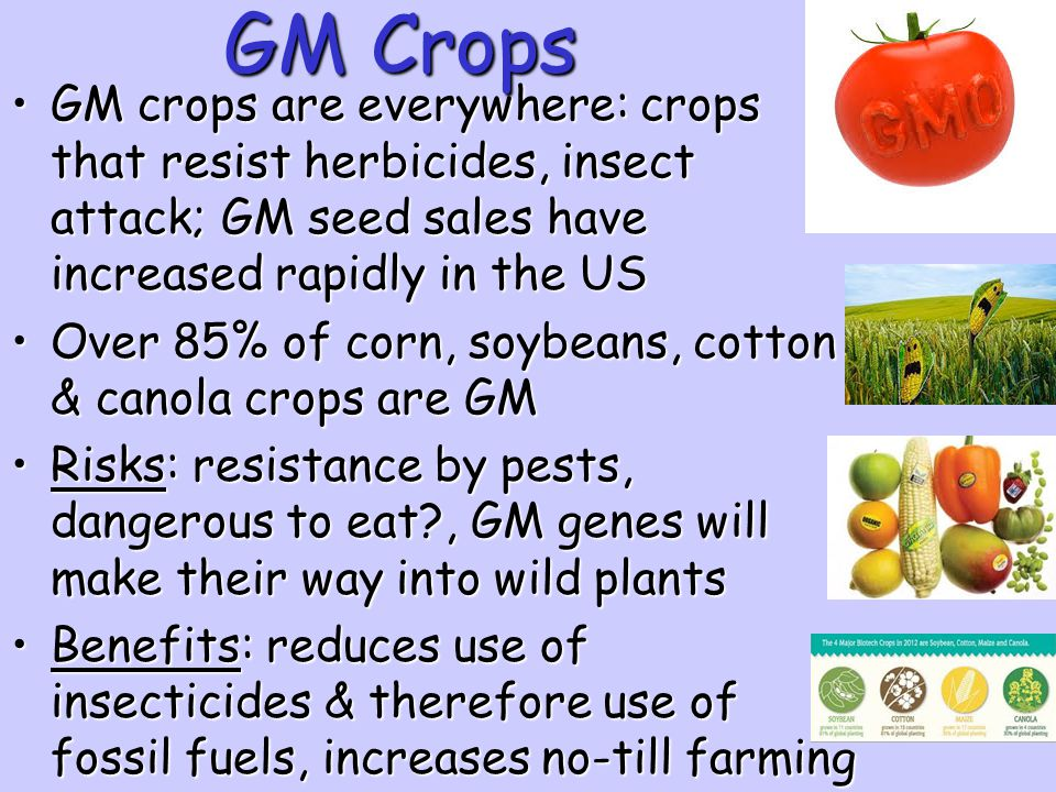 GM Crops GM crops are everywhere: crops that resist herbicides, insect attack; GM seed sales have increased rapidly in the US.