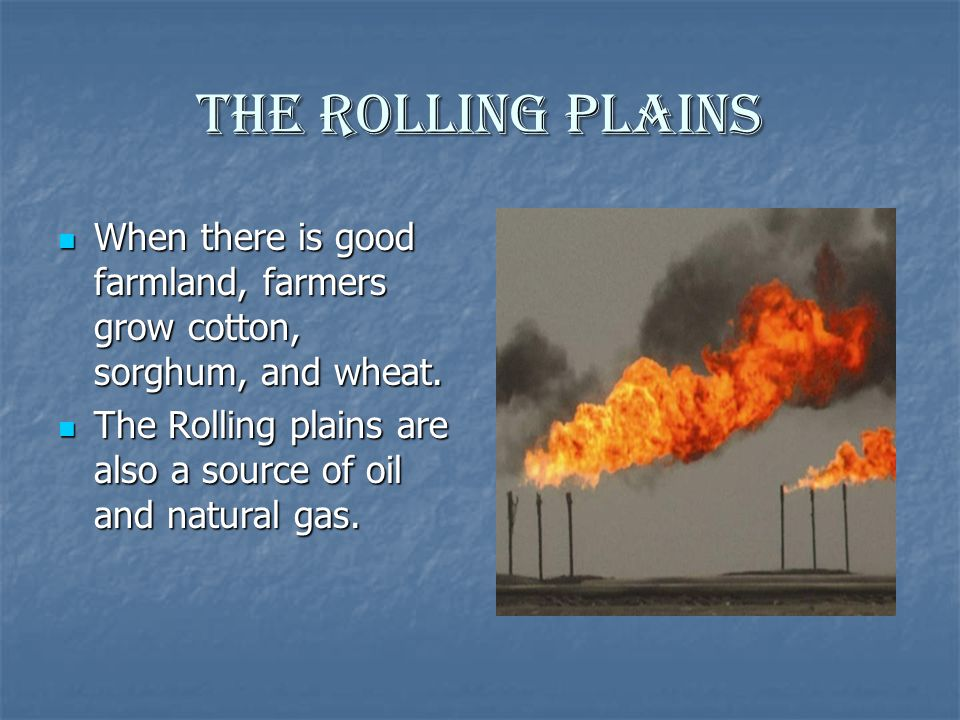 The Rolling Plains When there is good farmland, farmers grow cotton, sorghum, and wheat.