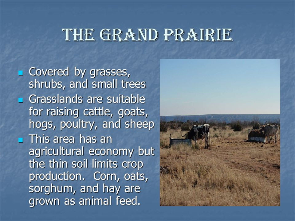The Grand Prairie Covered by grasses, shrubs, and small trees