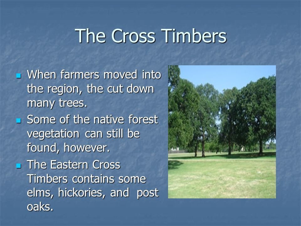 The Cross Timbers When farmers moved into the region, the cut down many trees. Some of the native forest vegetation can still be found, however.