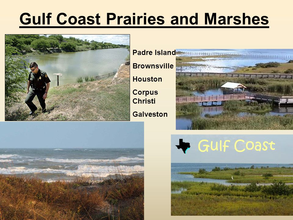 Gulf Coast Prairies and Marshes