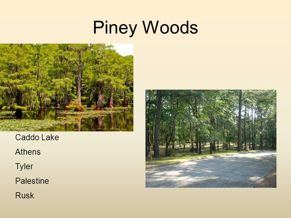 Piney Woods Caddo Lake Athens Tyler Palestine Rusk