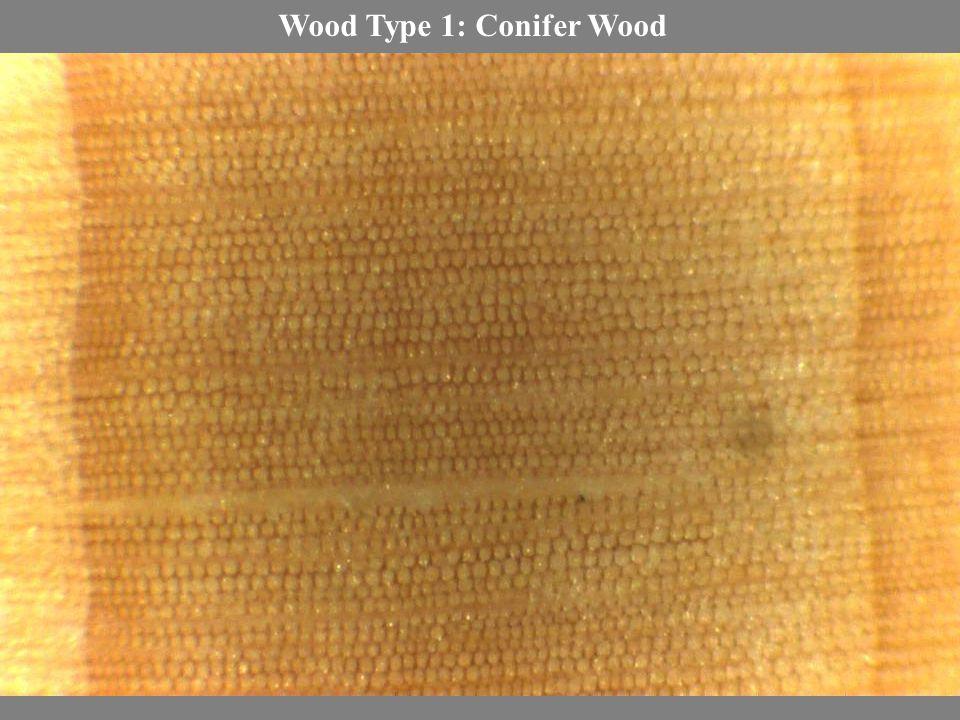 Wood Type 1: Conifer Wood