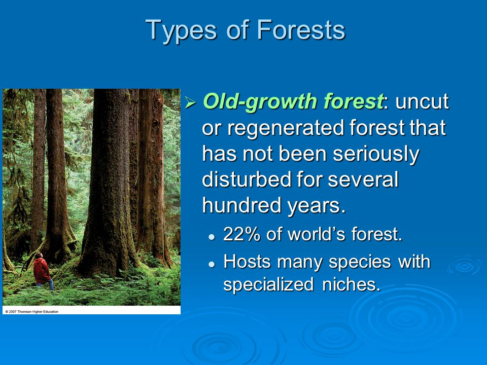 Types of Forests Old-growth forest: uncut or regenerated forest that has not been seriously disturbed for several hundred years.