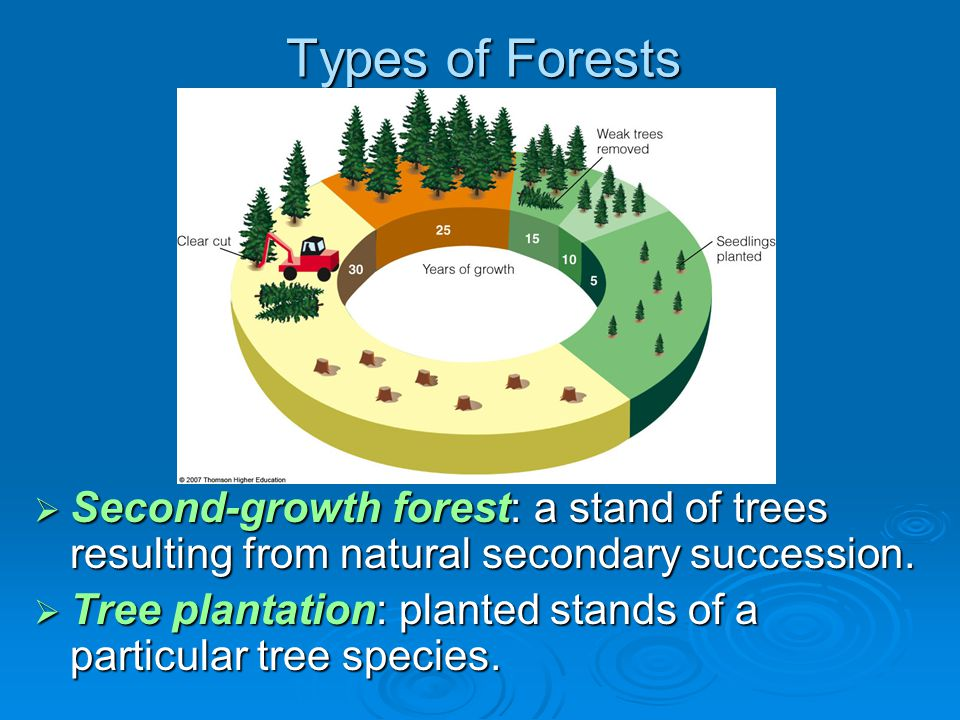 Types of Forests Second-growth forest: a stand of trees resulting from natural secondary succession.