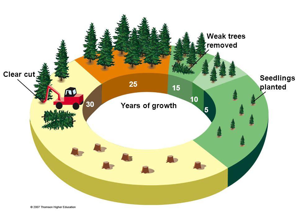 Weak trees removed Clear cut Seedlings planted 25 15 10 30