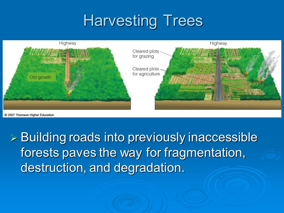 Harvesting Trees Building roads into previously inaccessible forests paves the way for fragmentation, destruction, and degradation.