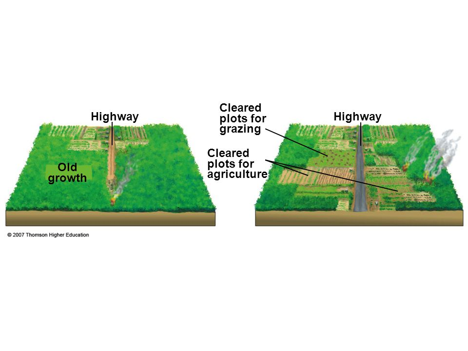 Cleared plots for grazing Highway Highway
