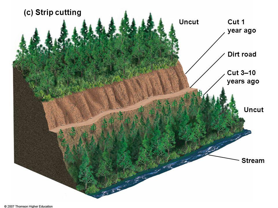 (c) Strip cutting Uncut Cut 1 year ago Dirt road Cut 3–10 years ago
