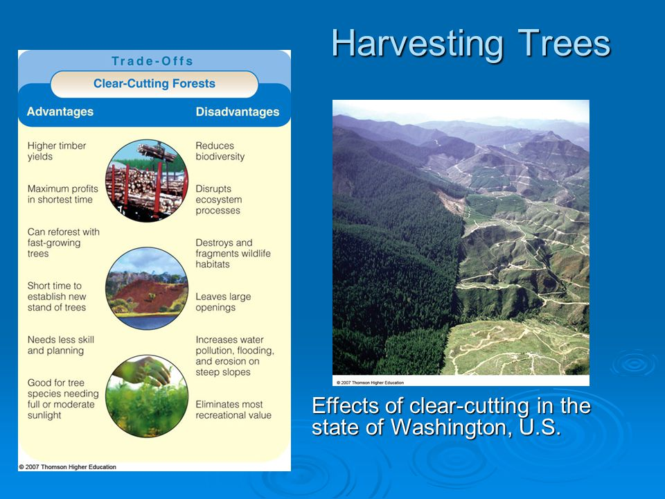 Harvesting Trees Effects of clear-cutting in the state of Washington, U.S.