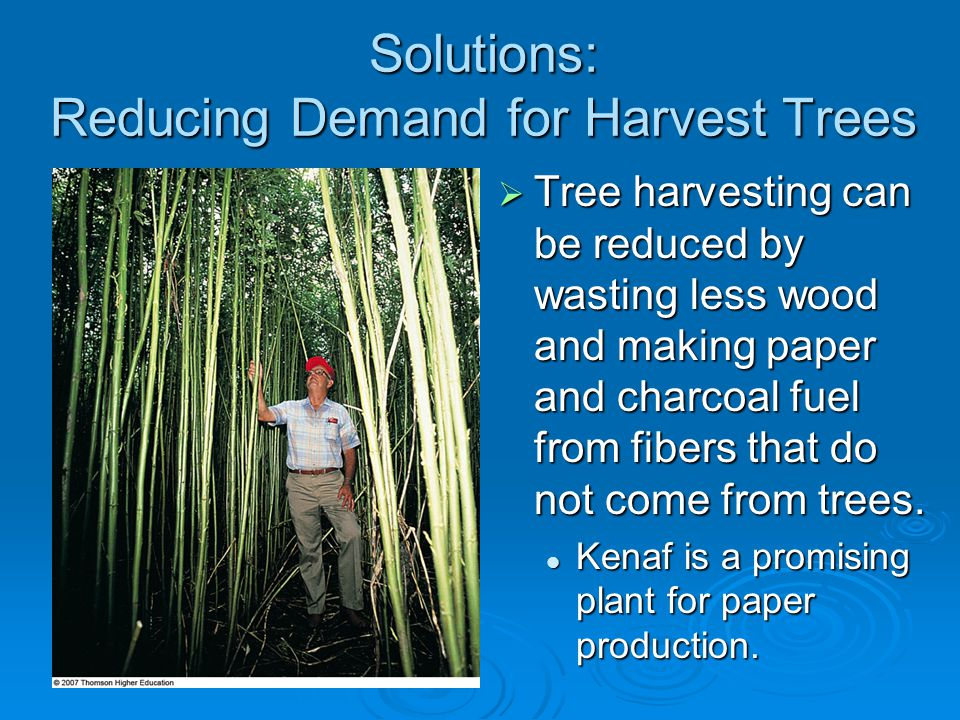 Solutions: Reducing Demand for Harvest Trees