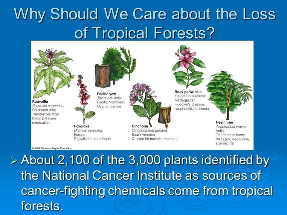 Why Should We Care about the Loss of Tropical Forests