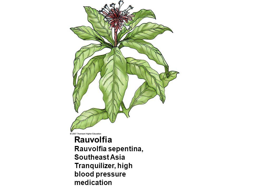 Rauvolfia Rauvolfia sepentina, Southeast Asia Tranquilizer, high