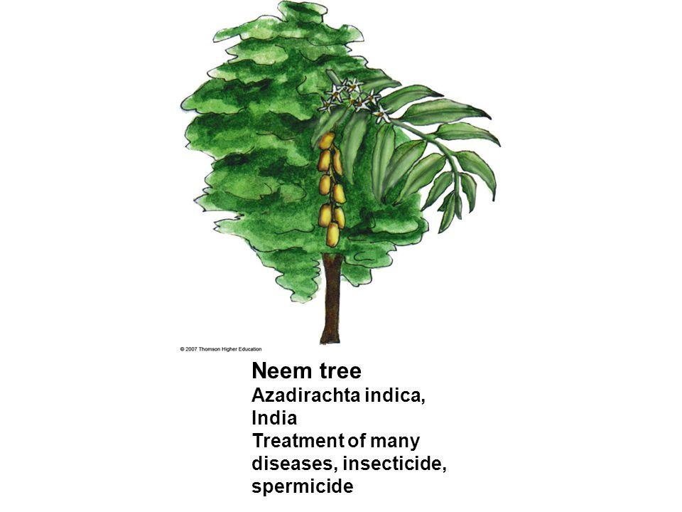 Neem tree Azadirachta indica, India Treatment of many