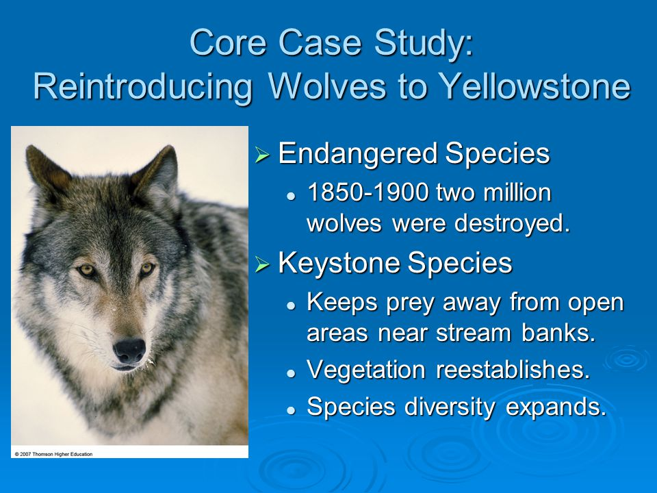 Core Case Study: Reintroducing Wolves to Yellowstone