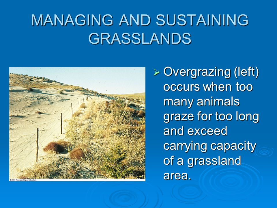 MANAGING AND SUSTAINING GRASSLANDS