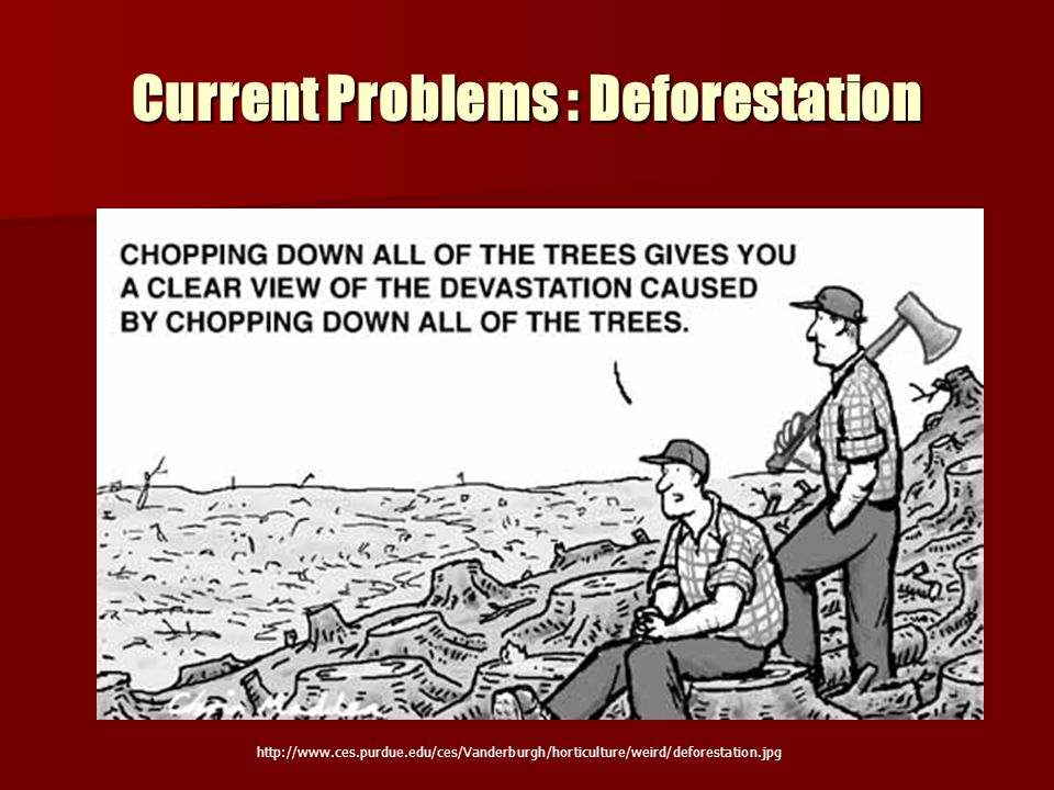 Current Problems : Deforestation