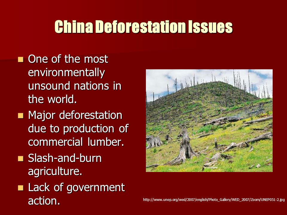 China Deforestation Issues