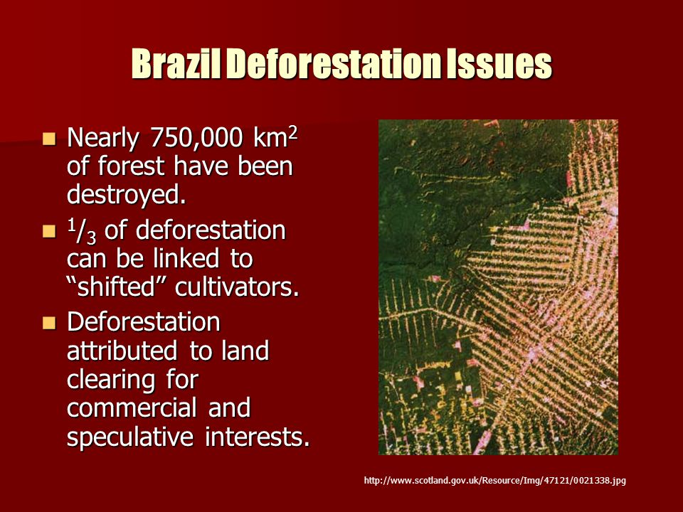 Brazil Deforestation Issues