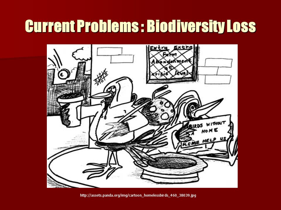 Current Problems : Biodiversity Loss