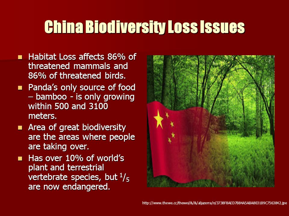 China Biodiversity Loss Issues