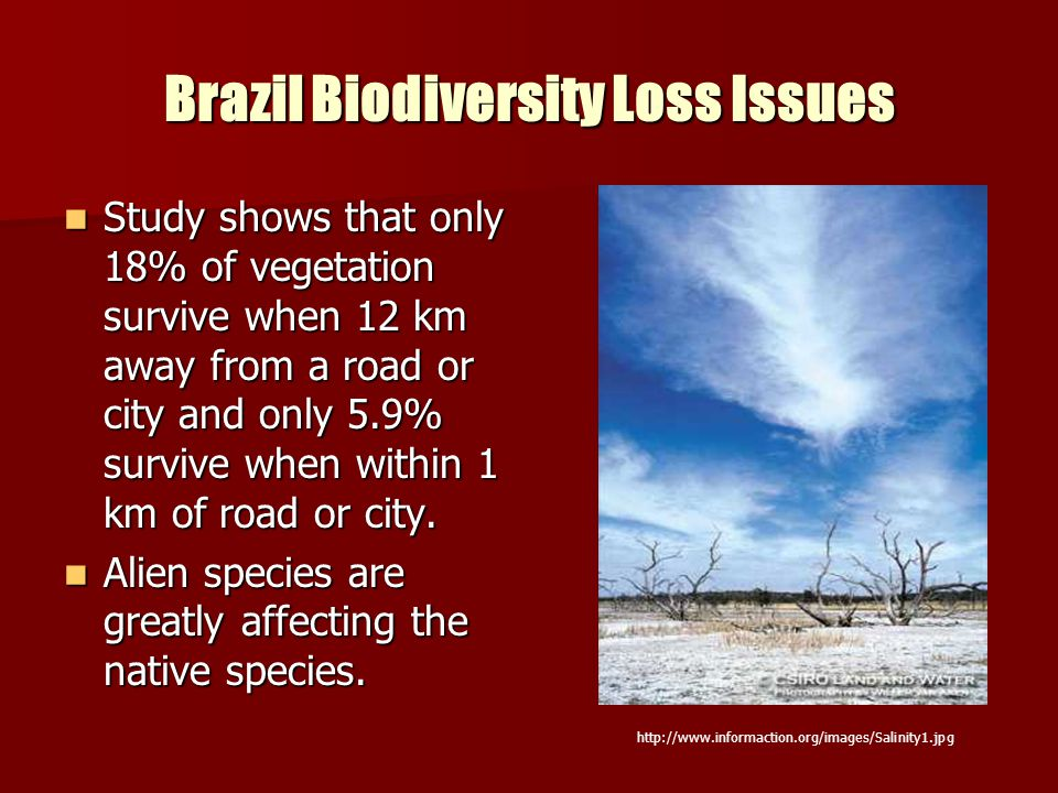 Brazil Biodiversity Loss Issues