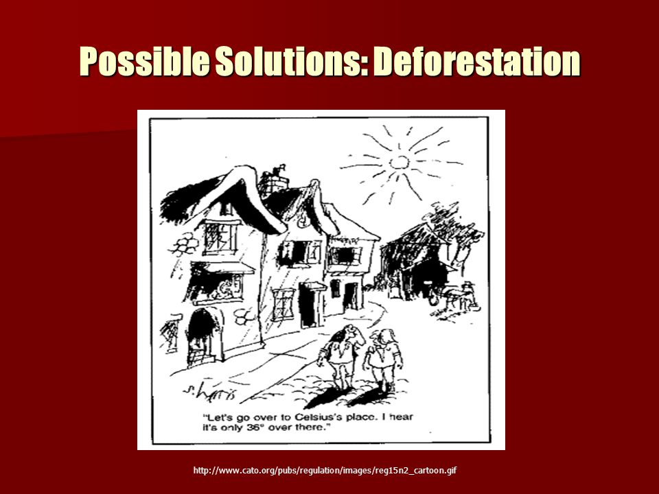 Possible Solutions: Deforestation