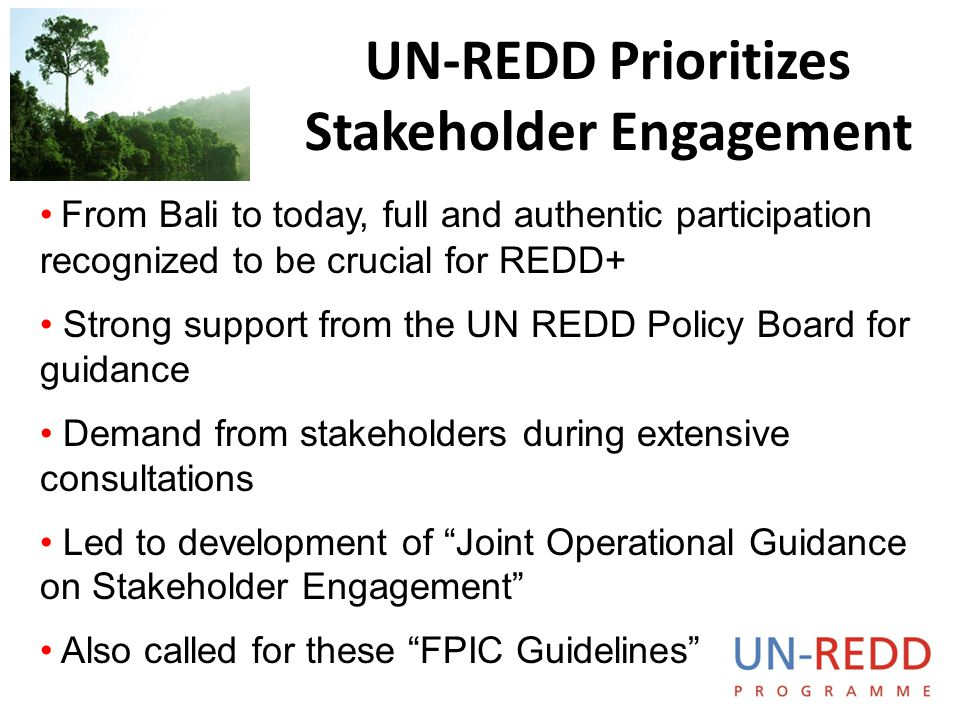 UN-REDD Prioritizes Stakeholder Engagement