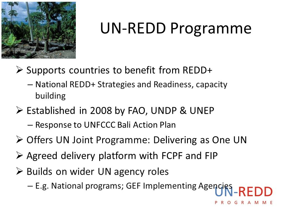 UN-REDD Programme  Supports countries to benefit from REDD+