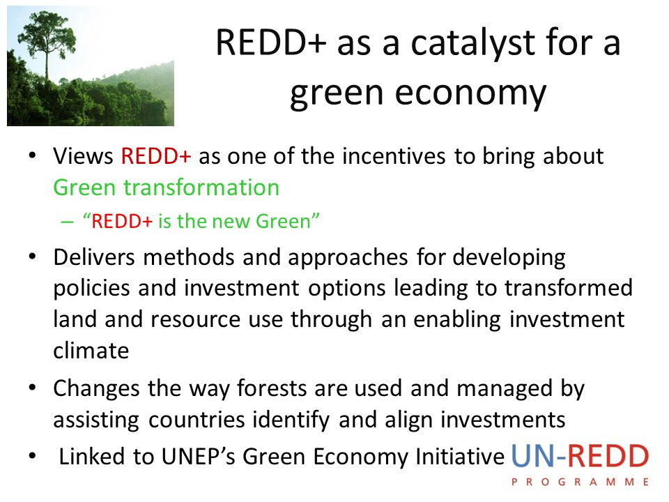 REDD+ as a catalyst for a green economy