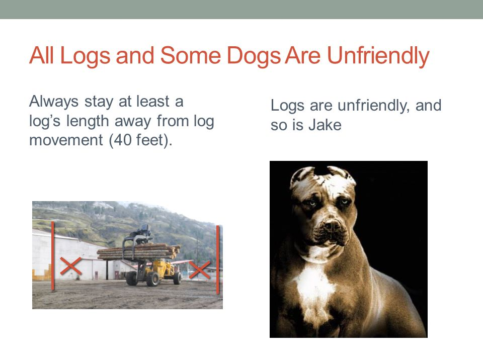 All Logs and Some Dogs Are Unfriendly