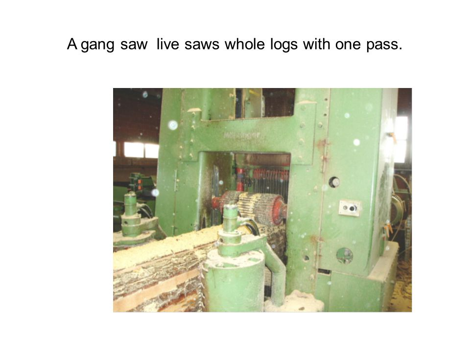 A gang saw live saws whole logs with one pass.