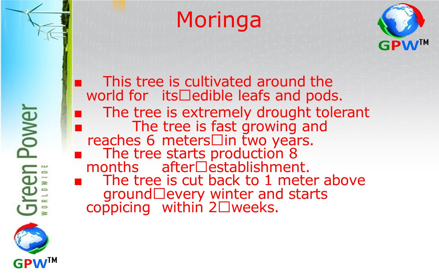 Moringa ■ This tree is cultivated around the world for its edible leafs and pods. ■ The tree is extremely drought tolerant.