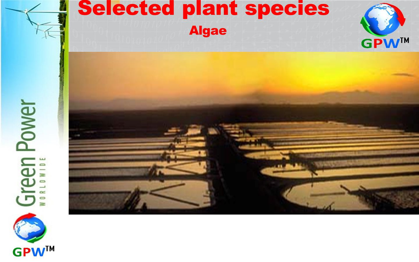 Selected plant species