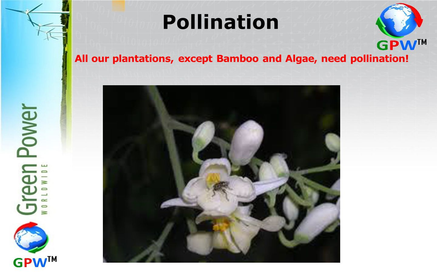 Pollination All our plantations, except Bamboo and Algae, need pollination!