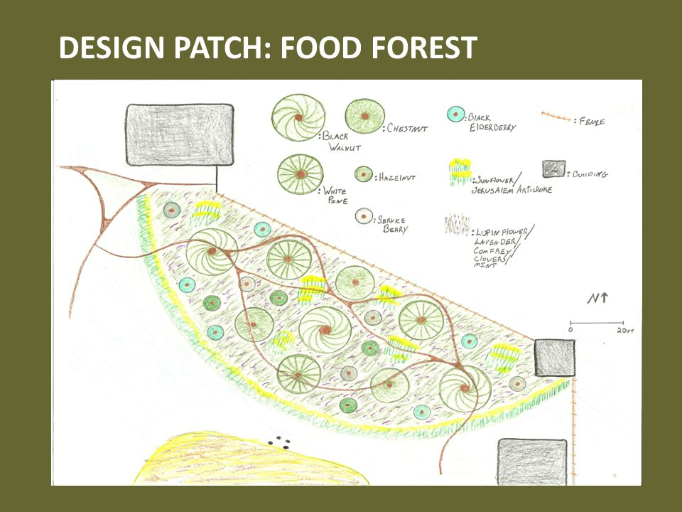 DESIGN PATCH: FOOD FOREST