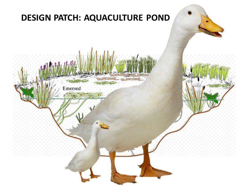DESIGN PATCH: AQUACULTURE POND