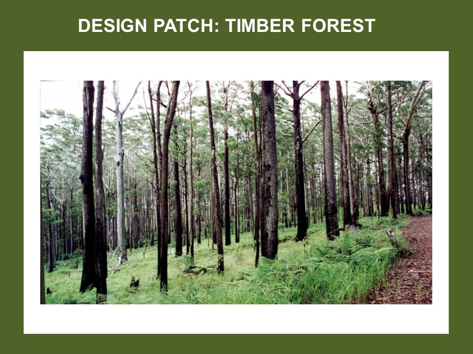 DESIGN PATCH: TIMBER FOREST